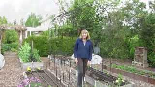 How To Grow Pole Beans On An Arbor Or Trellis