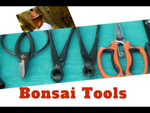 Bonsai Lesson/Bonsai Tools for Beginners/Bonsai Hunter