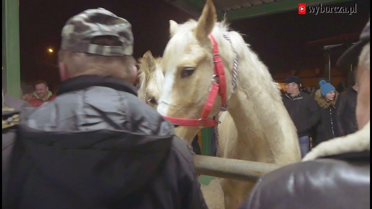 Reportaż z największego końskiego targu Wstępy w Skaryszewie
