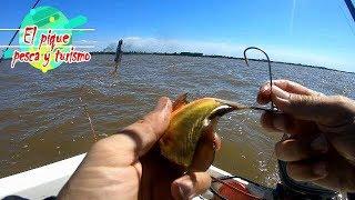 Dorado pescado con carnada y hermosas bogas!!!!