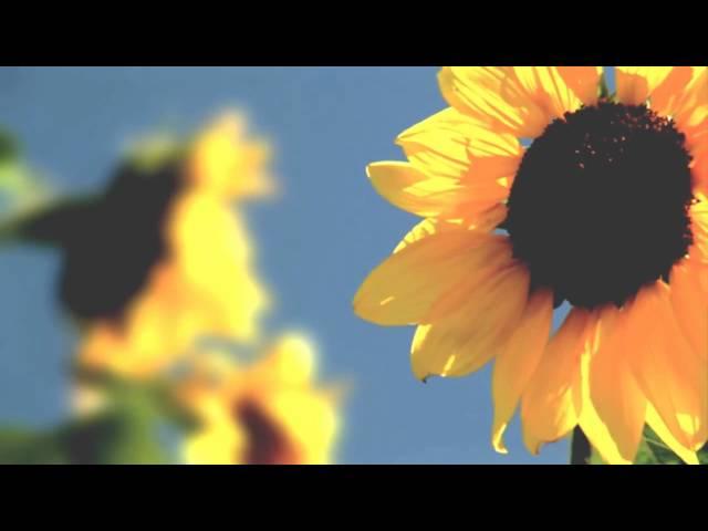 POESIA · Trailer zum Hörbuch · Film von Frank Suchland