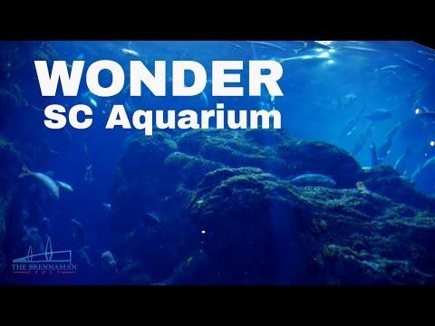Wonder Charleston Sc Aquarium Featurette Youtube