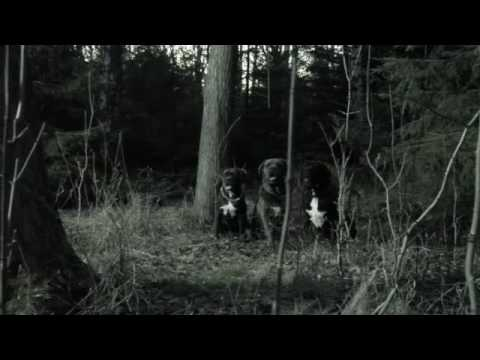 Donots - Stop the Clocks (Official Video)