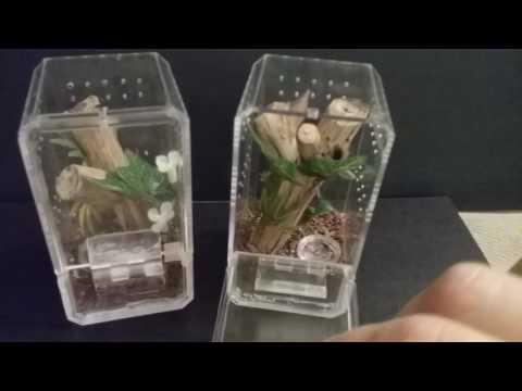Arboreal Sling Enclosures: Hobby Lobby Display Cases