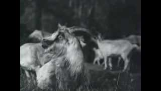 оперетта Имре Кальман - Сильва (Королева чардаша, Княгиня чардаша)