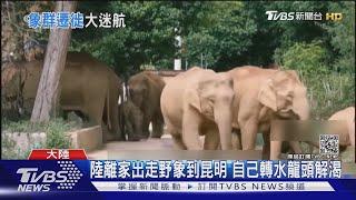 陸離家出走野象到昆明 自己轉水龍頭解渴|TVBS新聞