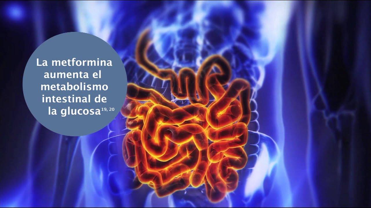 mecanismo de tratamiento de la diabetes albuminuria