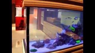 fish tank maintenance by n30