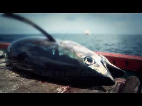 Destructive Fishing Practices - Ocean Park Hong Kong
