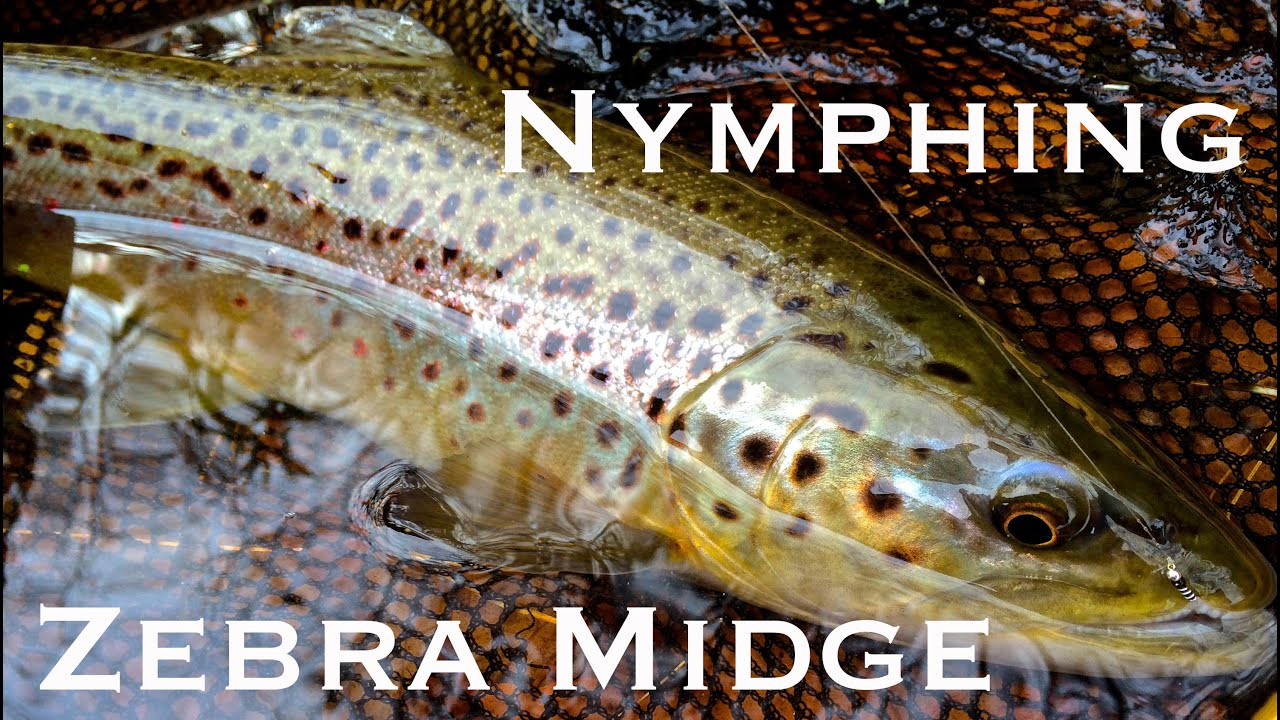 W4f fly fishing nymphing with a zebra midge youtube for Midge fly fishing