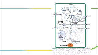 Mengenal Penyakit Kelainan Metabolisme Anak (Bag 2).