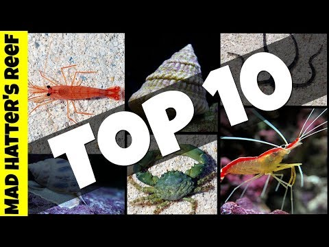 Top 10 Clean Up Crew For Your Reef Tank