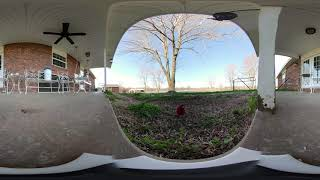 Elmdale Estate Bird Cam 4.1.2019