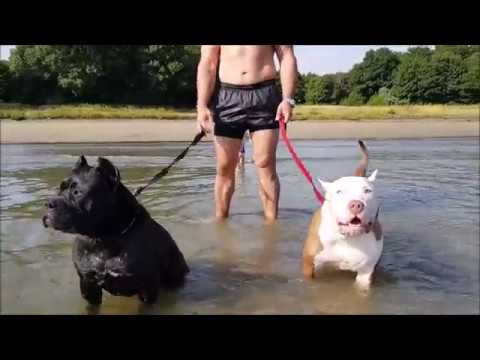 Water fun with family and my pitbull girls Panthera and Hennessy
