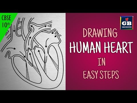 Easy way to draw human heart life processes 10th biology science easy way to draw human heart life processes 10th biology science cbse syllabus ncert class 10 videos ccuart Gallery