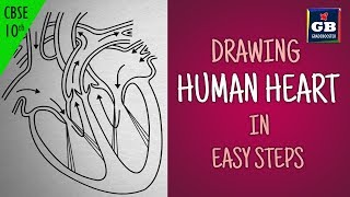 Easy way to draw human #heart :Life processes | NCERT class 10 | biology | science| CBSE syllabus