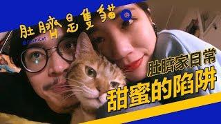 ◖肚臍是隻貓◗ 家庭天倫樂 ♮
