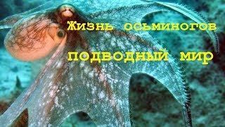 Жизнь Осьминогов. Дикая природа. Документальные фильмы о животных. Подводный мир