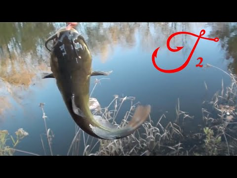 Native fish: Black Catfish (Neosilurus ater), Finniss River, NT. from YouTube · Duration:  1 minutes 1 seconds  · 1,000+ views · uploaded on 8/22/2013 · uploaded by pseudechis