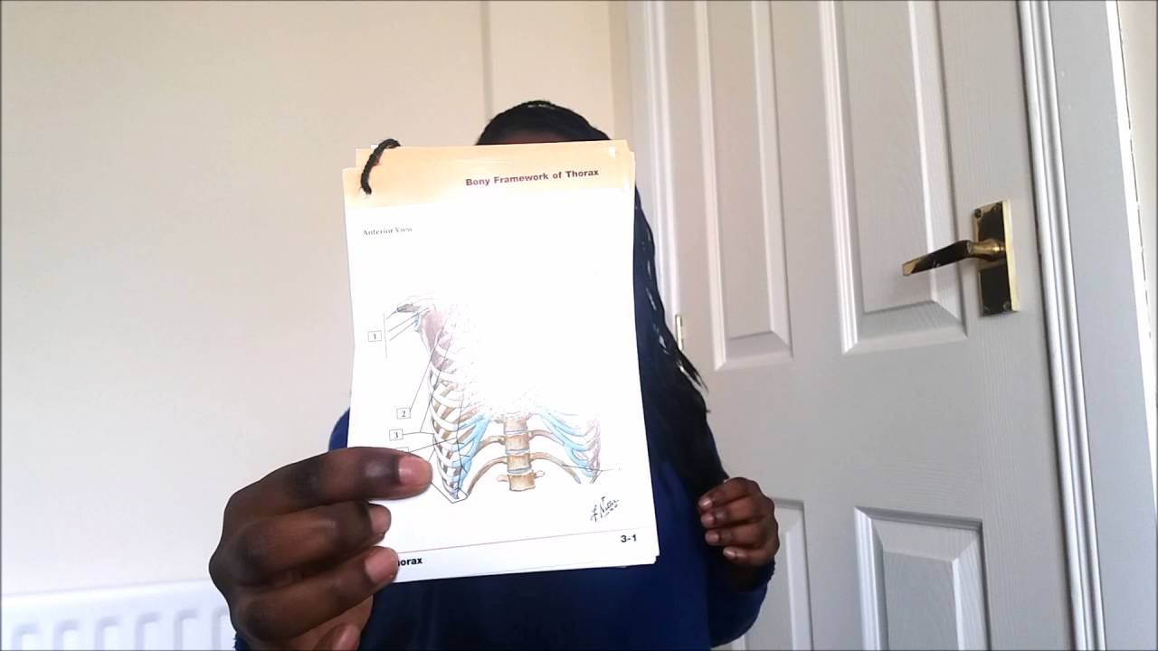 Med School Series || Netter\'s Anatomy Flashcards Review - YouTube