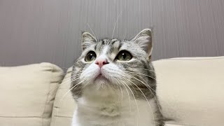 抜けたヒゲを猫の頭に植毛したらこうなった笑