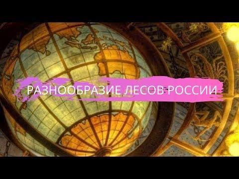 География 8 класс $26 Разнообразие лесов России