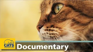 How cats smell: The world according to cats, episode four