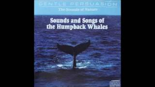 Sounds and Songs of the Humpback Whales - The Sounds of Nature