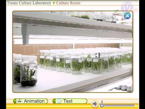 Tissue culture lab