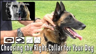 Choosing the Right Collar for Your Dog - Robert Cabral Dog Training