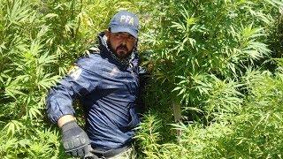 Historias Innecesarias: Historia de la Marihuana