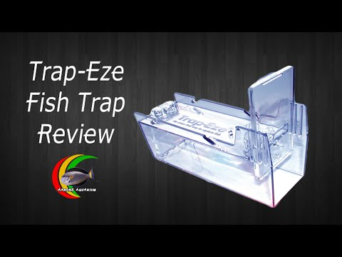 How to trap aquarium fish fish trap review youtube for Aquarium fish trap