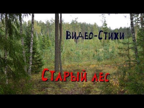 37. Старый лес. Видео-стихи