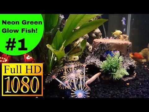 glow-fish-neon-green-tetra---fresh-water-fish-tank-4k-hd
