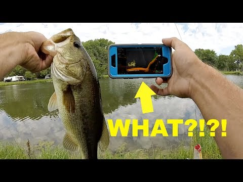 How To Turn Your Phone Into A FISH FINDER For Bank Fishing!!!