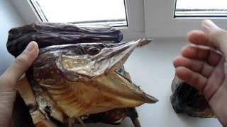 Чучело из головы щуки на блесну, видео rybachil.ru