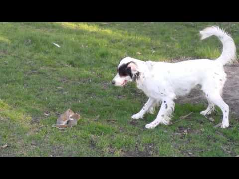 Unusual Animal Friends-Dog and Baby Squirrels