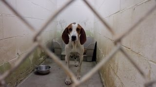 Millions of dogs are euthanized each year due to overcrowding in un...