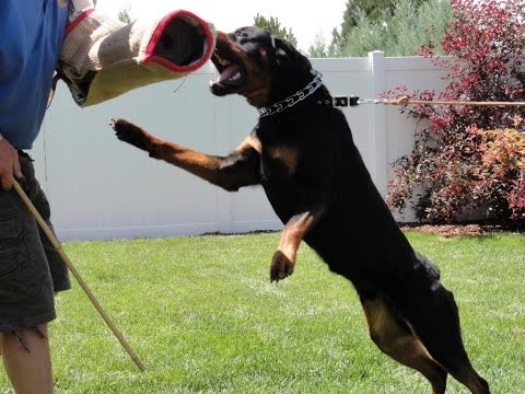we will inviting sajan dog training academy kottayam pala 9946515222