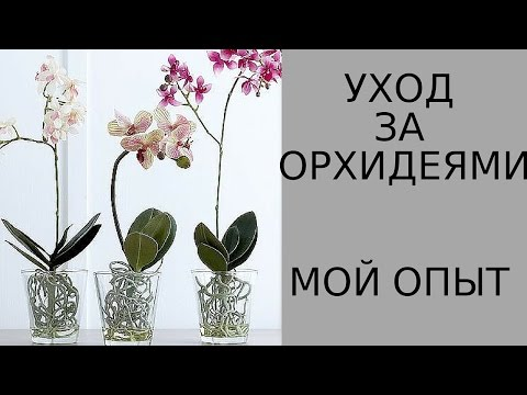 Как ухаживать за орхидеей в домашних условиях (фото и видео)