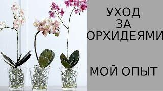 Как ухаживать за орхидеями. Мой опыт.(, 2014-05-13T15:36:52.000Z)