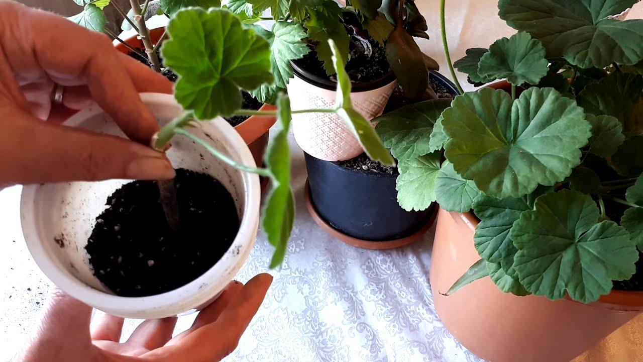 Salon Bitkileri Bakımı Nasıl Yapılır ?