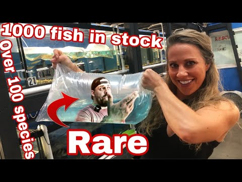 1000 FISH IN STOCK FOR SALE Part 1