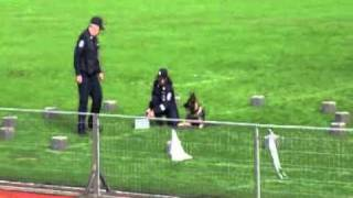 K9 Police Training.wmv