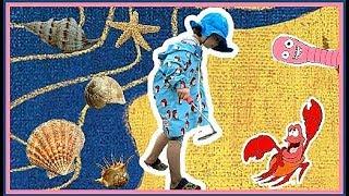 Семейные развлечения в Корее! Охота на моллюсков ;)