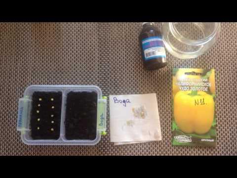 Всхожесть семян с перекисью водорода? Результат удивил!!!