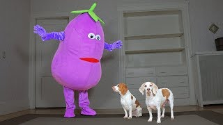 dogs-surprised-by-dancing-eggplant-funny-dogs-maymo-potpie-penny