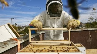 Looking For A New Hobby? Download A Beehive For Your Balcony