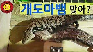 블루텅이 순하다고? 파충류(Reptile) BlueTu…