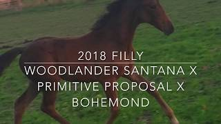2018 Filly Woodlander Santana x Primitive Proposal